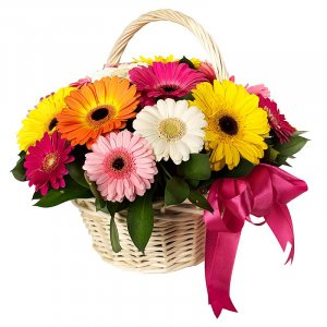 Basket full of mini Gerberas