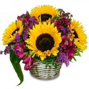 Sunflowers and Alstromeria Basket