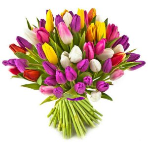 Mixed coloured Tulips
